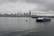 Boat Cruise Seattle